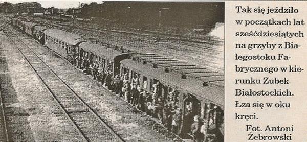 Wyprawa pociągiem na grzyby do Puszczy Knyszyńskiej.